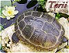 Avatar de Terii