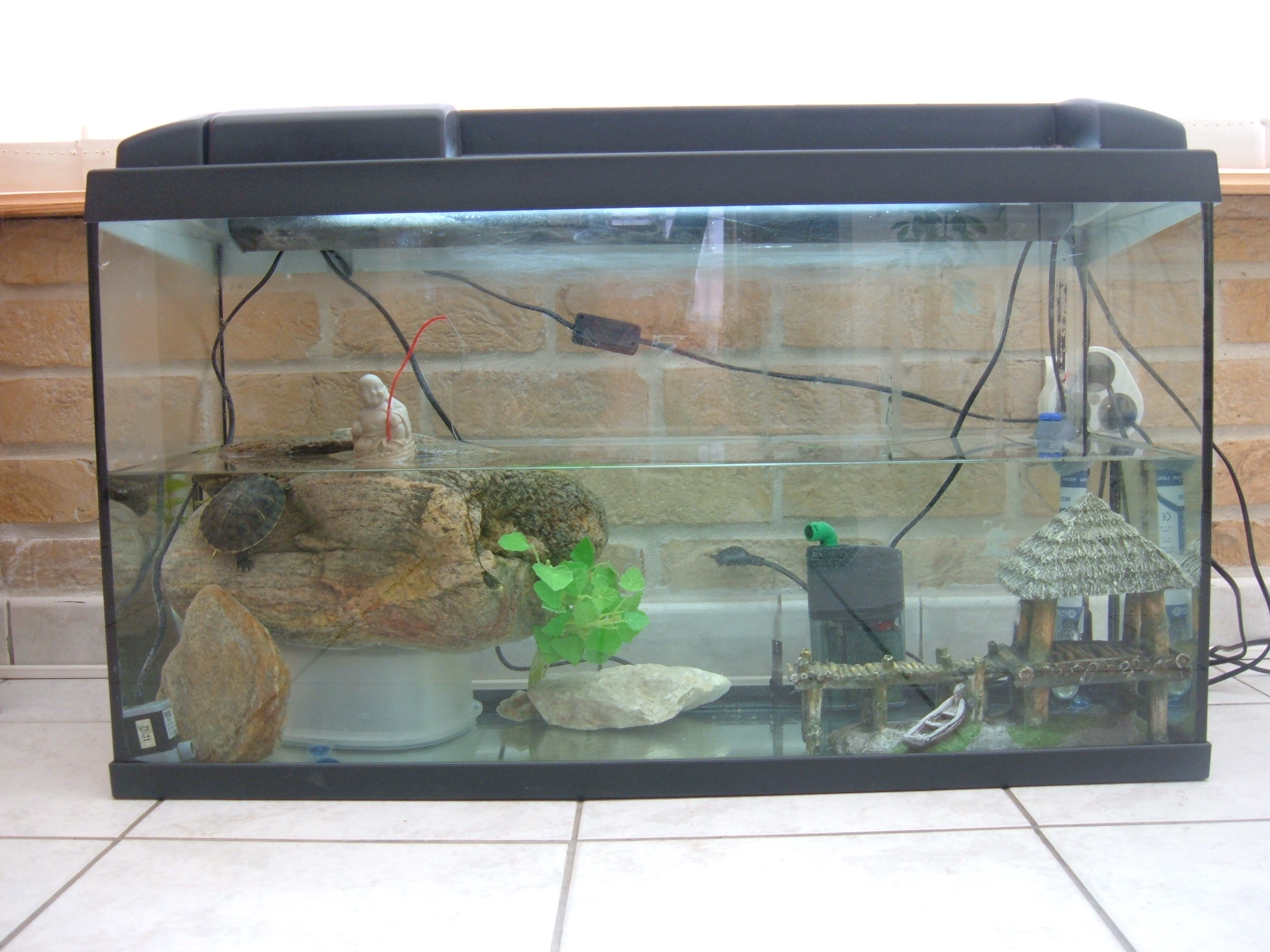 Luxus aquarium a tortue id es de conception de table basse for Filtre aquarium tortue