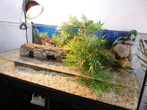 D coration aquarium a tortue for Aquarium tortue