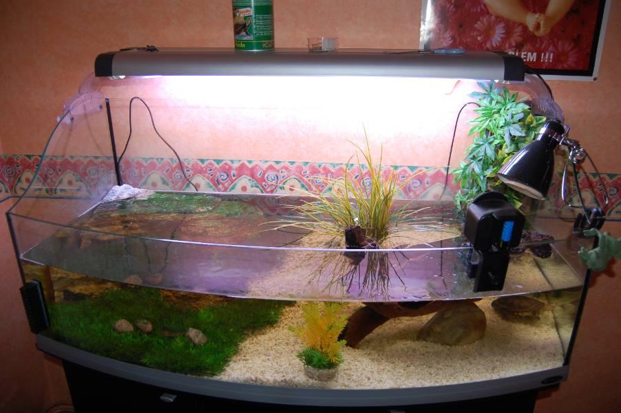 nouvelle dans le monde des tortues besoins de quelque conseil tortue d eau douce forum