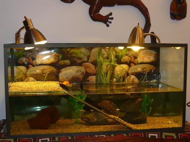 mes deux nouvelles tortue alice june tortue d 39 eau. Black Bedroom Furniture Sets. Home Design Ideas