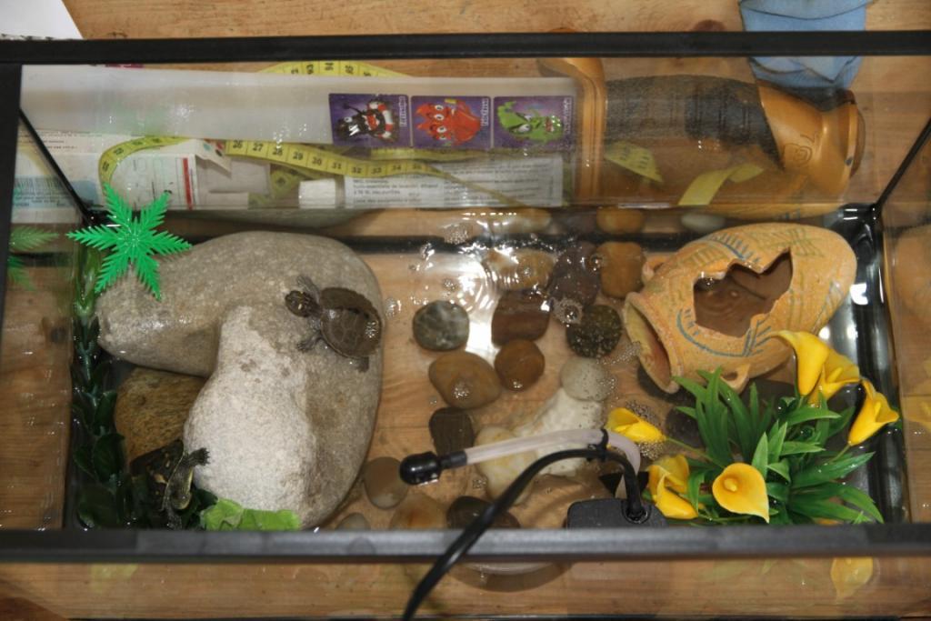aquarium pour tortue d 39 eau pas cher. Black Bedroom Furniture Sets. Home Design Ideas