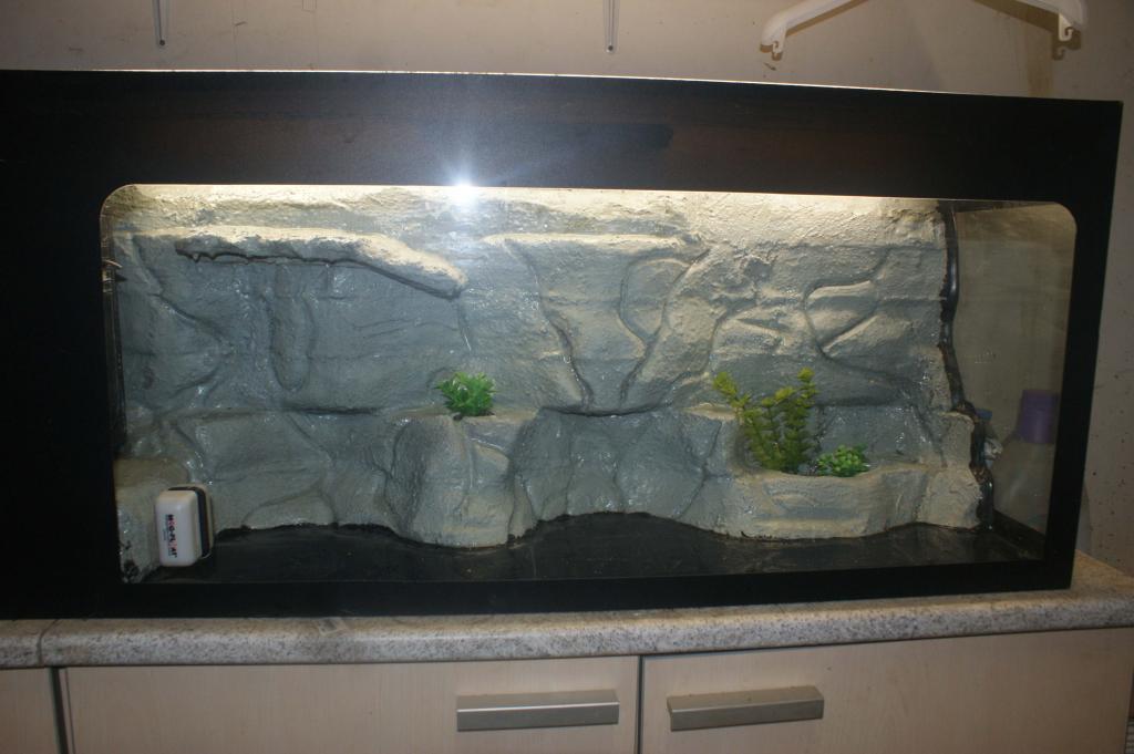le d 233 cor de mon terrarium tortue d eau douce forum la tortue facile