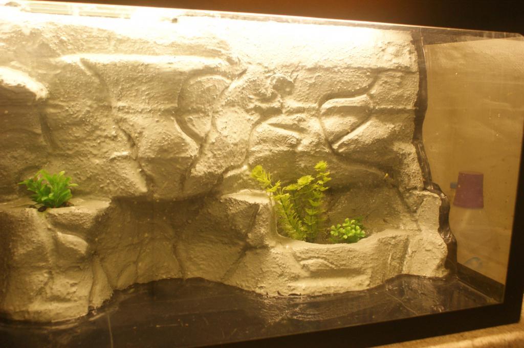 le d cor de mon terrarium tortue d 39 eau douce forum la tortue facile. Black Bedroom Furniture Sets. Home Design Ideas